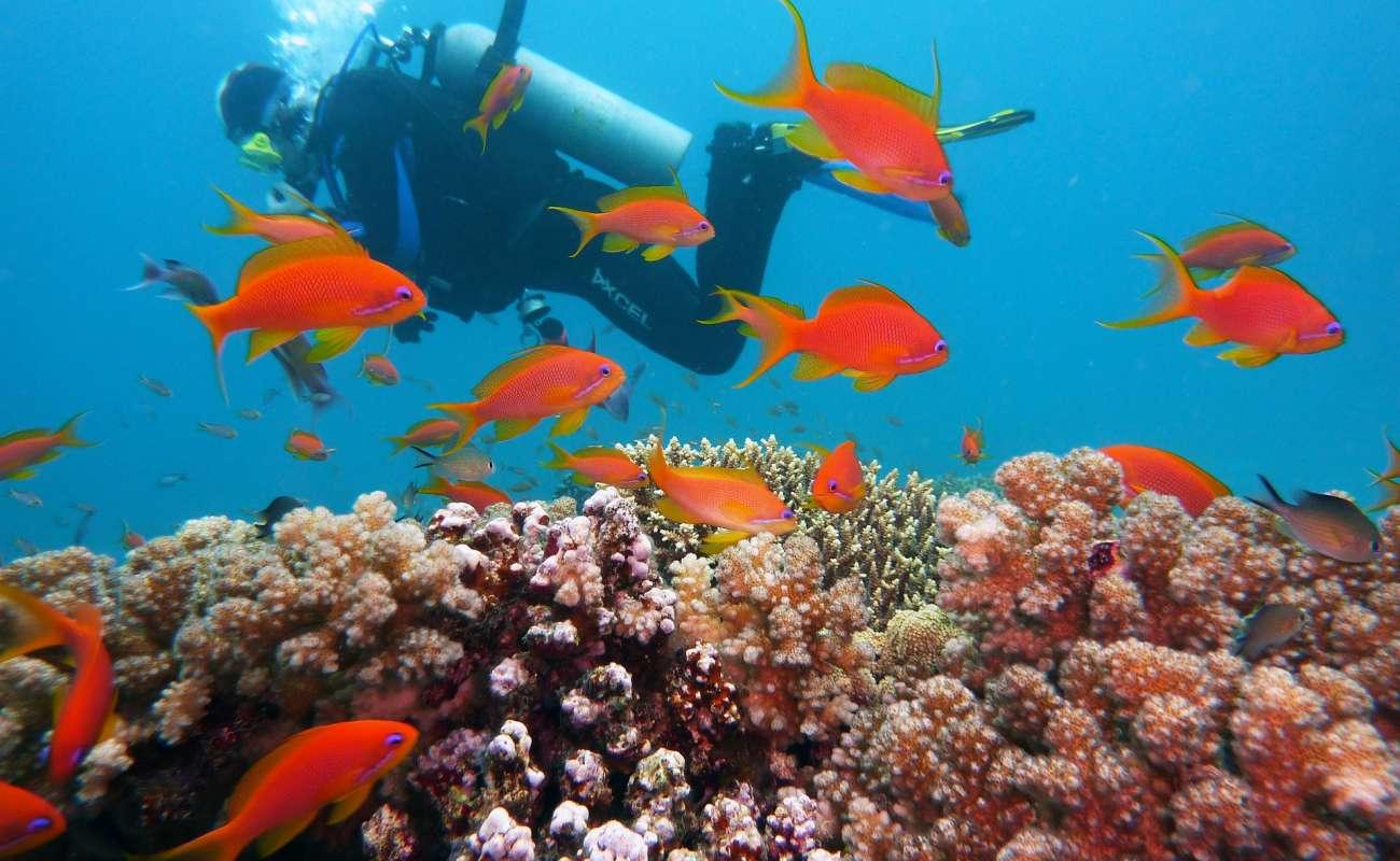 Potápění vs. šnorchlování na dovolené: rady a tipy